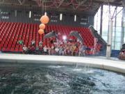 Delfinarium - Výlety - Bulharsko - 01