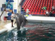 Delfinarium - Výlety - Bulharsko - 04