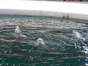 Delfinarium - Výlety - Bulharsko - 15