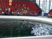 Delfinarium - Výlety - Bulharsko - 22