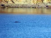 Divocí delfíni - 01