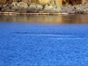 Divocí delfíni - 02