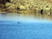 Divocí delfíni - 03